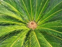 Palm leaves patterns Royalty Free Stock Photos