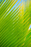 Palm leaves, plant over nature background, beautiful tree Stock Images