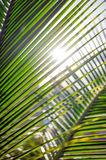 Palm leaves, plant over nature background, ropical beach tree Royalty Free Stock Photos