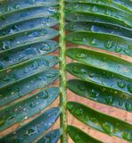 Palm Leaves after the Rain Royalty Free Stock Images