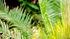 Palm leaves after rain. Macro video shift motion. 1920*1080 stock footage