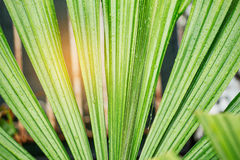 Palm leaves after rain. Stock Images