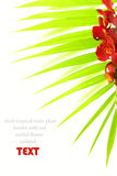 Palm leaves and red orchid Stock Images