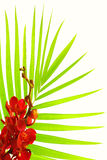 Palm leaves and red orchid Royalty Free Stock Photography