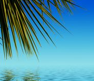 Palm leaves reflected in water Royalty Free Stock Photos