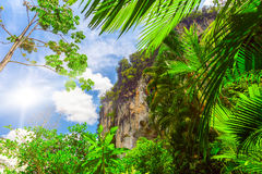 Palm leaves and rock Royalty Free Stock Image