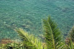 Palm leaves and sea Royalty Free Stock Photography