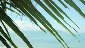Palm leaves with sea background on the blurred tropical beach in slow motion. 1920x1080. Palm leaves with sea background on the tropical beach in slow motion stock video footage