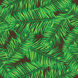 Palm leaves. Seamless vector background. Floral. Stock Images