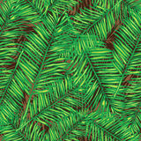 Palm leaves. Seamless vector background. Floral. Royalty Free Stock Photos