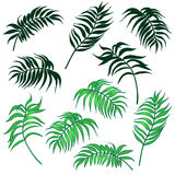 Palm leaves set Royalty Free Stock Photography
