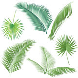 Palm leaves set Stock Photo