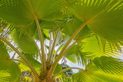 Palm leaves with shadow Stock Photos