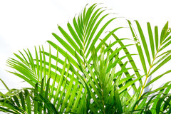 Palm leaves and shadows on a white wall. Close up palm leaves and shadows on a white wall Stock Images