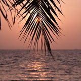 Palm leaves silhouette Royalty Free Stock Image