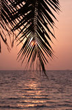 Palm leaves silhouette Stock Photography