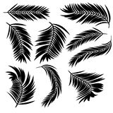 Palm Leaves Silhouette Stock Photo