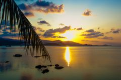 Palm leaves silhouette over sunset on Koh Samui. Stock Image