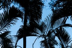 Palm leaves silhouette with blue sky. Palm leaves silhouette texture with blue sky background Royalty Free Stock Images