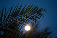 Palm leaves silhouettes in moonlight Stock Image
