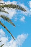 Palm leaves sky Royalty Free Stock Image