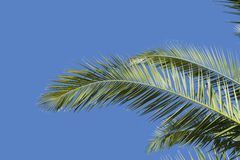 Palm leaves and sky Royalty Free Stock Photography