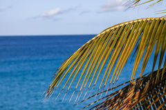 Palm leaves Stock Photography