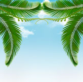 Palm leaves on sky. Royalty Free Stock Image