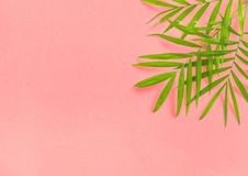 Palm leaves pink Floral flat lay Summer holidays stock photo