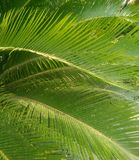 Palm leaves in summertime royalty free stock photography