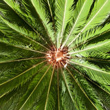 Palm leaves in sun light Royalty Free Stock Image