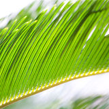 Palm leaves in sun light Stock Photos