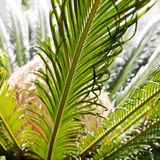 Palm leaves in sun light Royalty Free Stock Photography