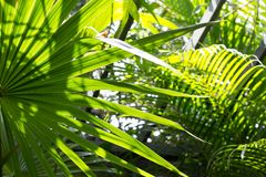Palm leaves in the sun Stock Image