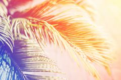 Palm leaves in sunlight. Palm leaves in sunlight toning with rainbow color. Nature tropical background Stock Photography