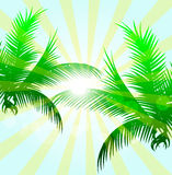 Palm Leaves With Sunlight Stock Photo