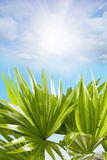 Palm leaves sunny blue sky clouds in the background Royalty Free Stock Images