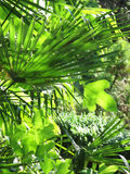 Palm leaves. In a sunny day royalty free stock photos