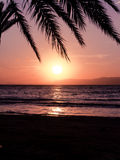 Palm leaves at sunset Royalty Free Stock Photography