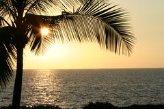 Palm Leaves at Sunset Horizontal. Leaves of Palm Trees hiding the sun behind them with the ocean in the foreground.  Golden yellow and black.  Vertically taken Stock Image