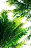 Palm leaves. With sunshine against the sky Royalty Free Stock Photo