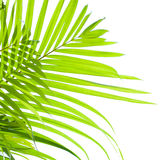 Palm leaves swaying in the breeze Royalty Free Stock Images