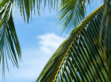 Palm Leaves Taking Pleasure Of Sun And Blue Sky Stock Image