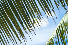 Palm leaves taking pleasure of sun and blue sky Stock Photos