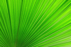 Palm leaves texture Royalty Free Stock Photo