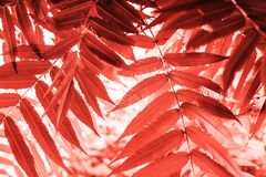 Palm leaves texture stock image