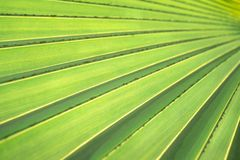 Palm leaves texture with shadow royalty free stock images