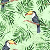 Palm leaves and Toucan. Watercolor seamless pattern. Watercolor floral seamless pattern with birds Royalty Free Stock Photo