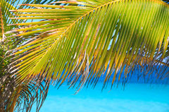 Palm leaves on tropical beach and blue sea Royalty Free Stock Image
