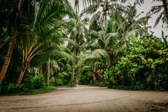 Palm leaves.Tropical Forest on the island stock photography